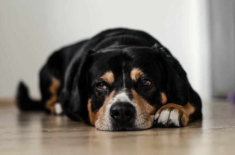 Mascotas y rupturas: descubre cómo pueden afectarles